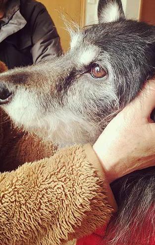 老犬訪問介護