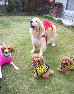 ペットホテル・ケージフリー・ドックラン・ペットケア・トリミング・犬のようちえん長野市・千曲市・須坂市